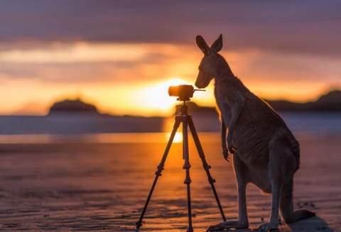 Tour du lịch Australia 7 ngày 6 đêm